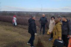 На многих молдавских плантациях проходят проверки с участием российских экспертов