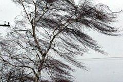Более 20 населенных пунктов остались без света после воскресного ветра