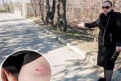 Нападение бродячих собак: на прошлой неделе в Бельцах были покусаны 12 человек