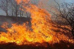 Нескольких граждан наказали за сжигание мусора и сухой растительности