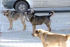 Бездомные собаки становятся опасными для жителей столицы