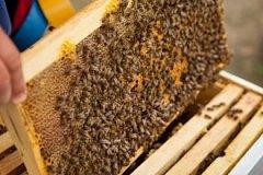Молдавские пчеловоды получат вертикальные ульи в рамках проекта USAID