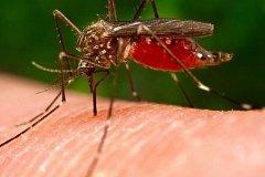 Есть ли у комаров «любимая» группа крови?