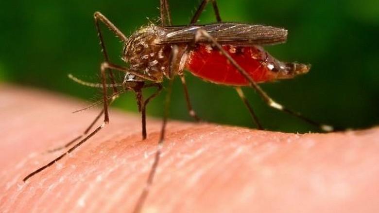 """У комаров нет """"любимой"""" группы крови, они одинаково """"хорошо"""" относятся к любой из них!"""