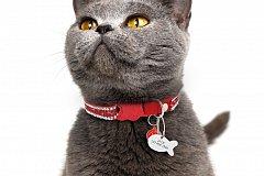 В Татарстане наркотики перевозят кошки?