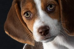 Какие собаки живут дольше всего?