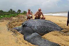 Как выглядит самая большая черепаха в мире?